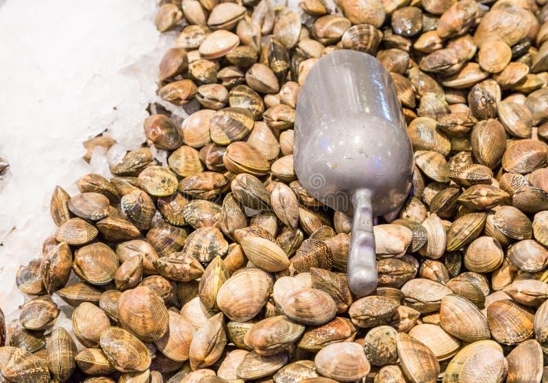 Свежие clams на льде стоковые изображения