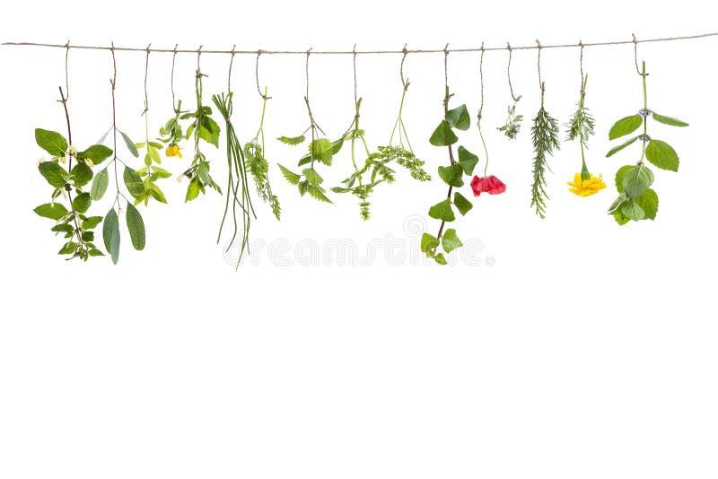 Свежие flovouring травы и eatable цветки вися на строке, перед backgroung interieur стоковое изображение rf