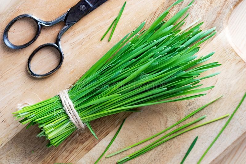 Свежие wheatgrass и ножницы на деревянной разделочной доске стоковые изображения