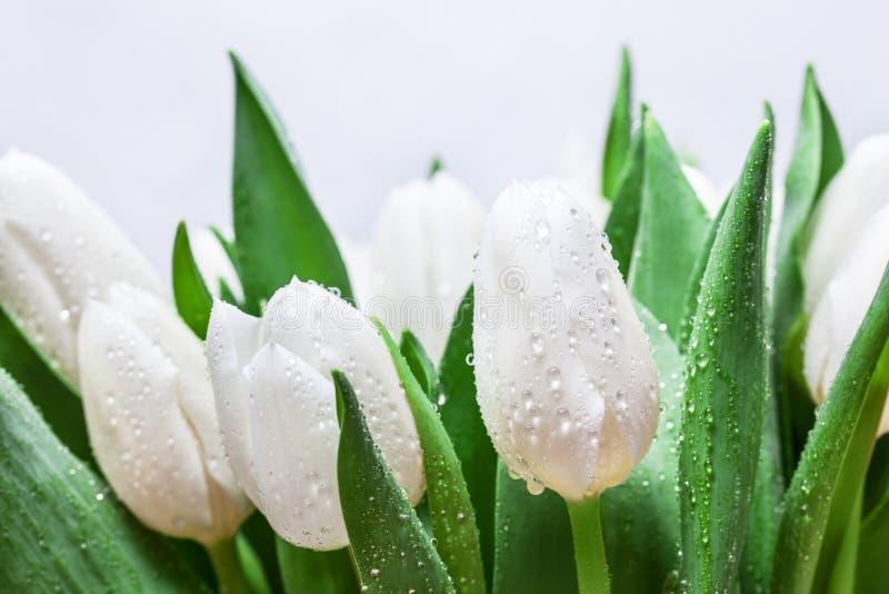 Свежий белый букет тюльпана с водой падает конец-вверх на белой предпосылке Весна стоковые изображения rf