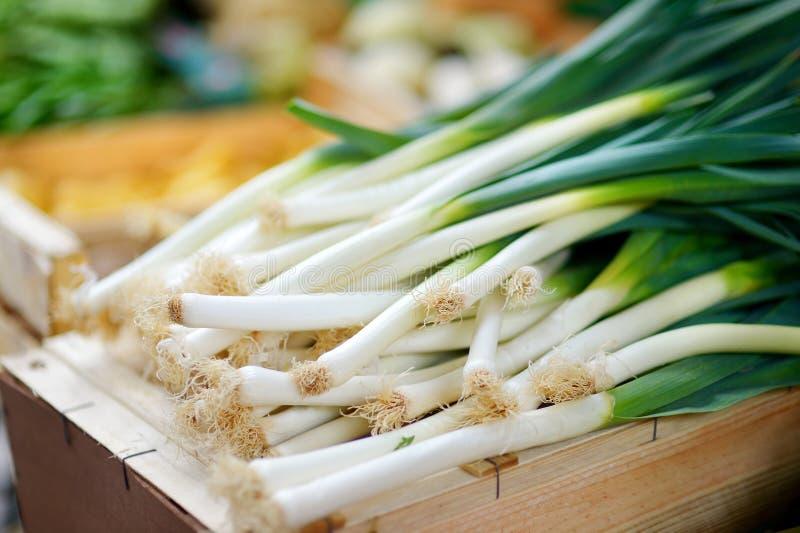 Свежий био лук-порей на рынке сельскохозяйственной продукции фермера стоковые фото