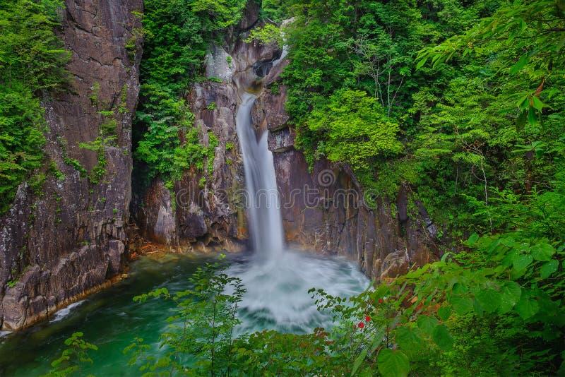 свежий водопад лета стоковые фотографии rf