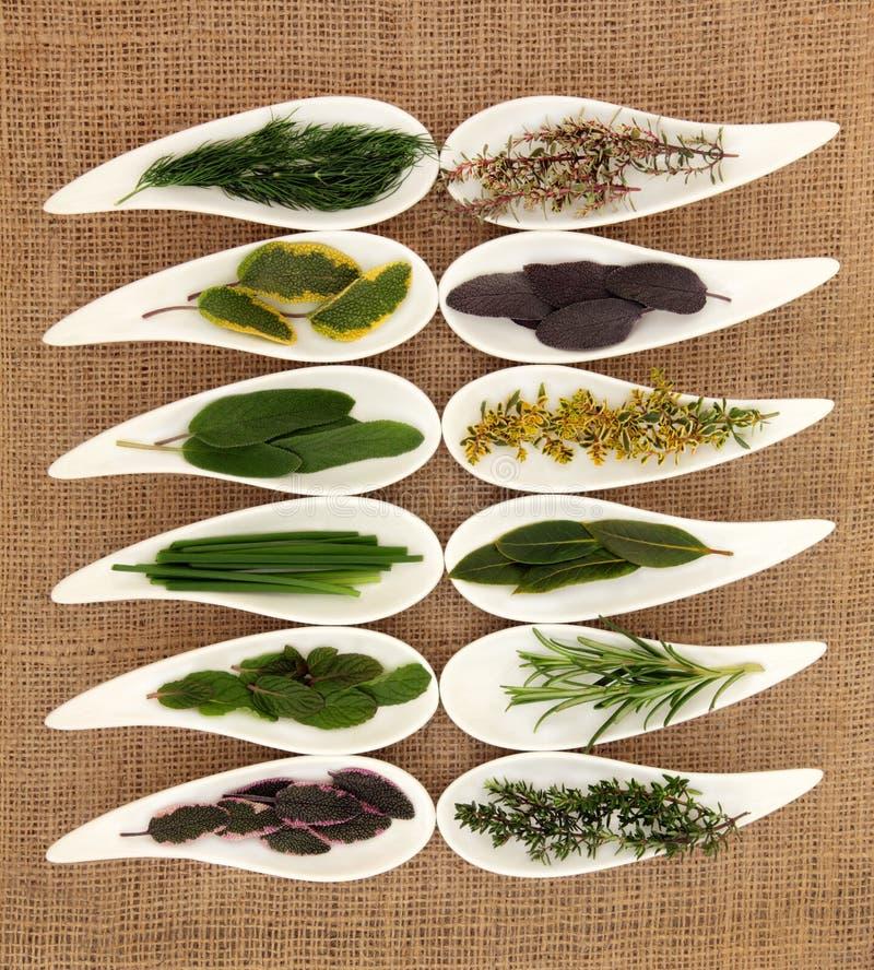 Свежий выбор травы стоковые фото