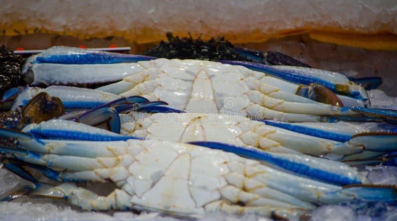 Свежий голубой краб пловца на льде на рынке морепродуктов, Сиднее, Австралии стоковые изображения