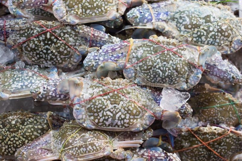 Свежий голубой рак на рынке морепродуктов стоковое фото