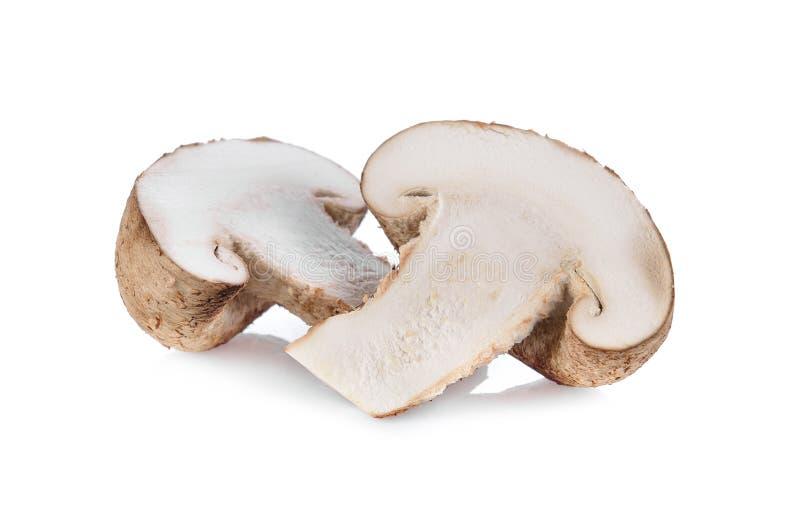 Свежий гриб шиитаке на белой предпосылке стоковое фото rf