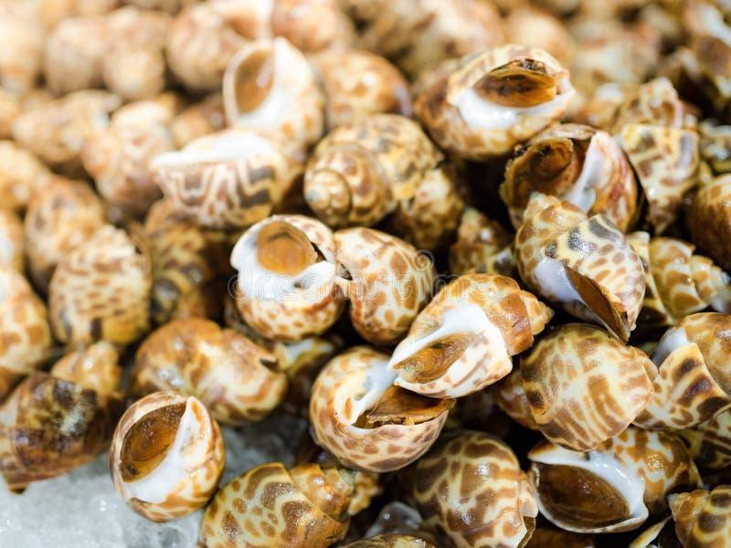 Свежий запятнанный Вавилон в тайском рынке морепродуктов стоковые фотографии rf