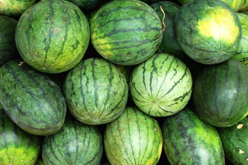 свежий зеленый арбуз стоковые изображения rf