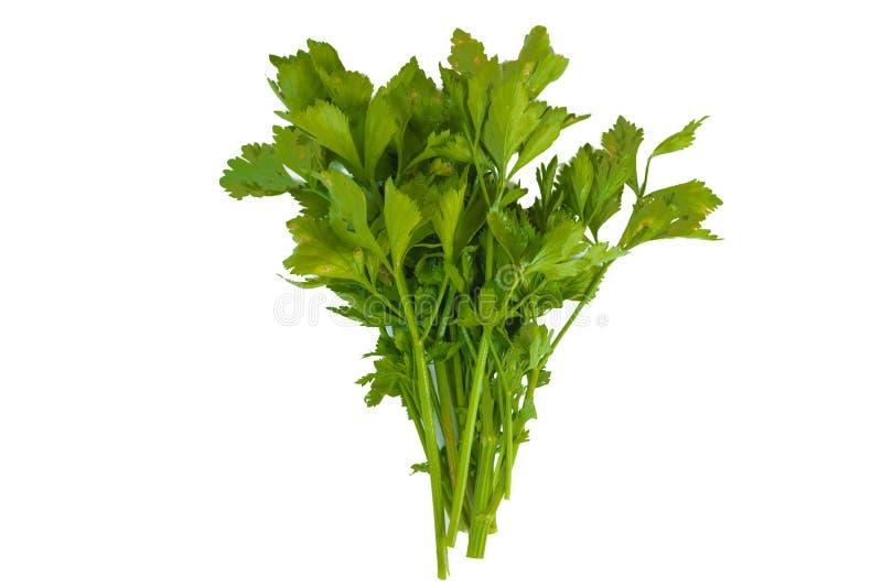 Свежий зеленый овощ сельдерея лист сельдерея на белой предпосылке стоковая фотография rf