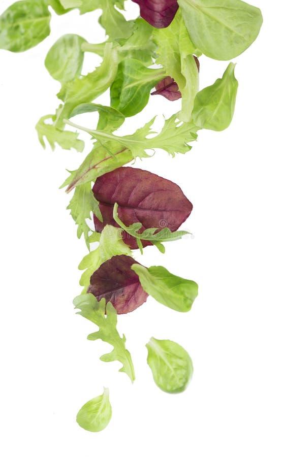 Свежий зеленый салат салата листьев изолированный на белой предпосылке стоковые изображения rf