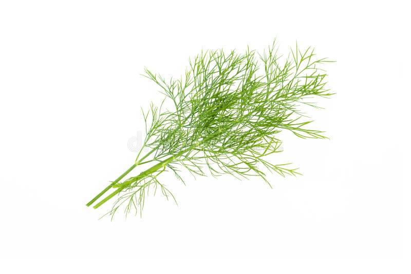 Свежий зеленый укроп выходит пук, сырцовые органические изолированные лист, на белую предпосылку стоковая фотография rf