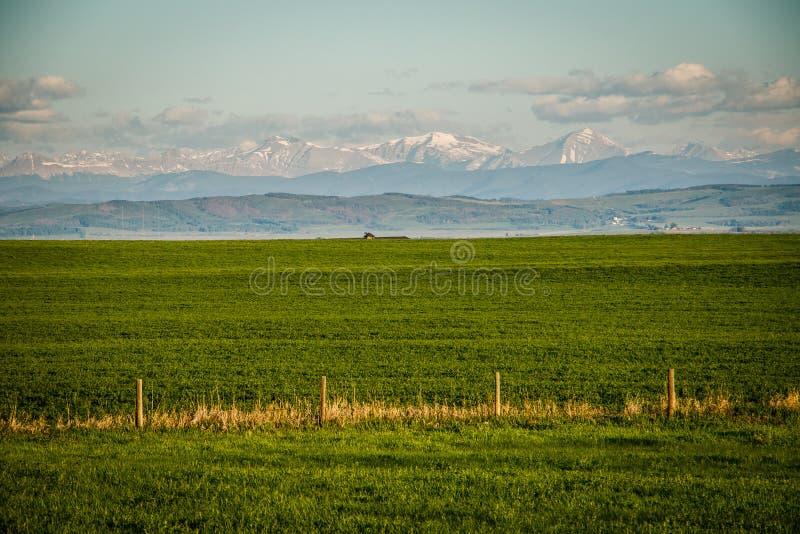 Свежий зеленый цвет сельскохозяйственных угодиь в южной Альберте в Канаде стоковые фотографии rf