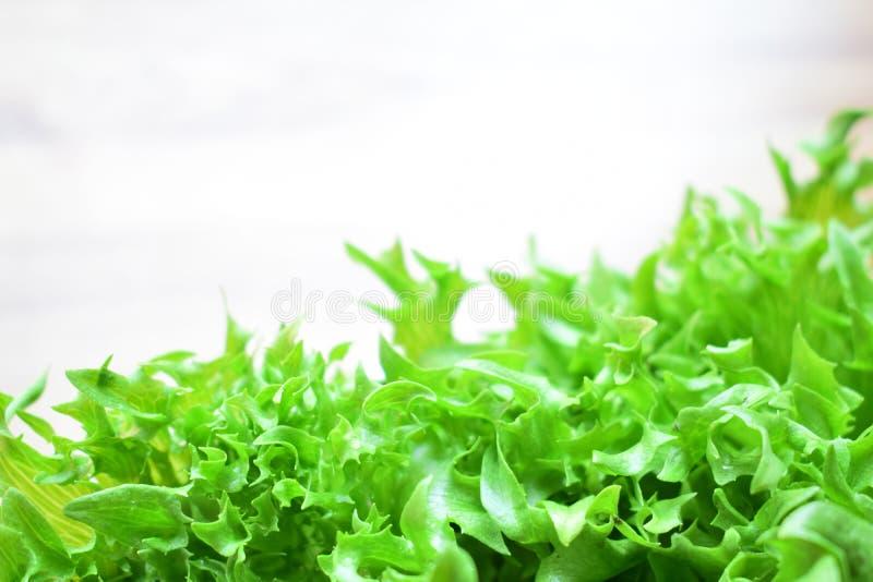 Свежий зеленый frilly айсберг стоковые фотографии rf
