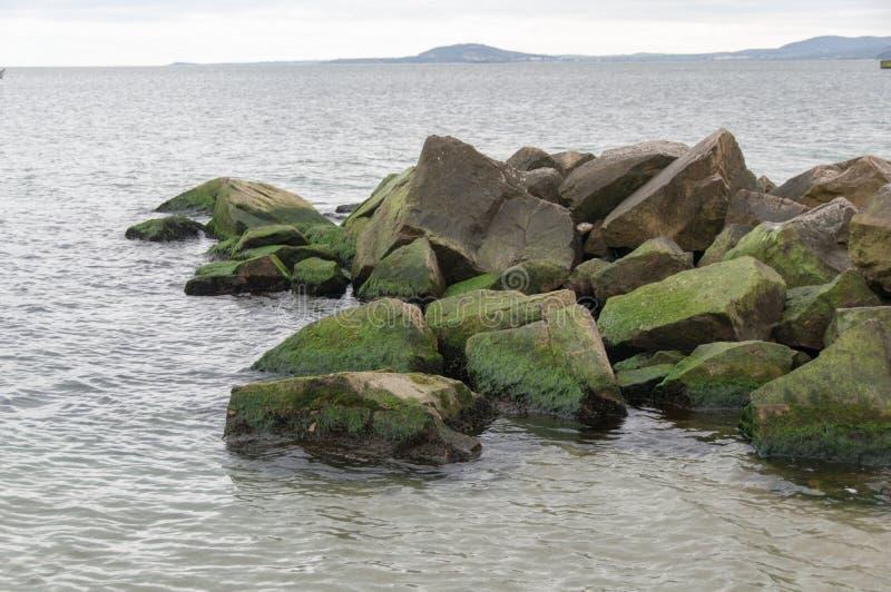 Свежий зеленый океан стоковая фотография rf