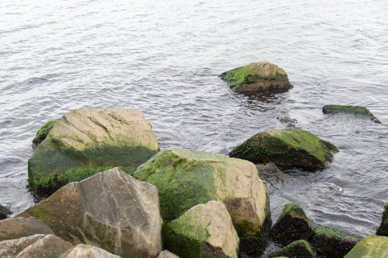 Свежий зеленый океан стоковые фотографии rf