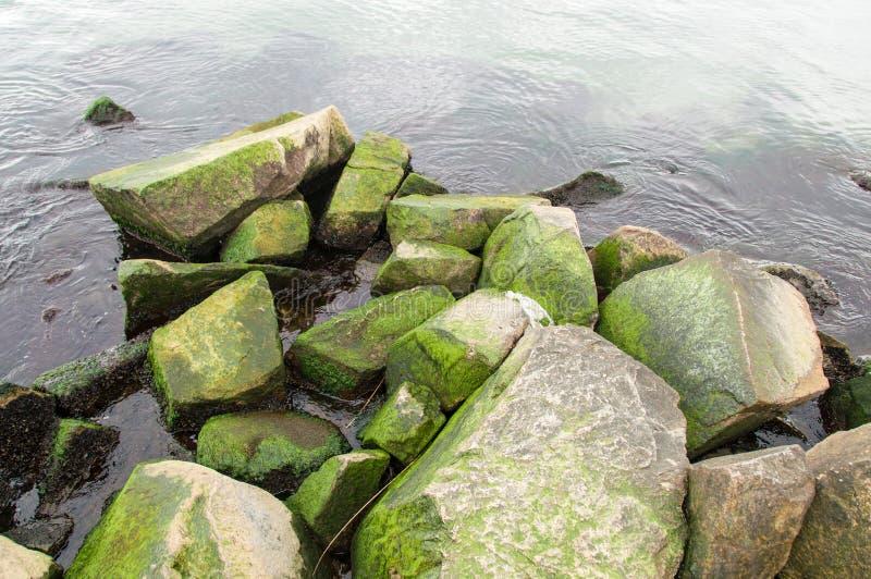 Свежий зеленый океан стоковое фото