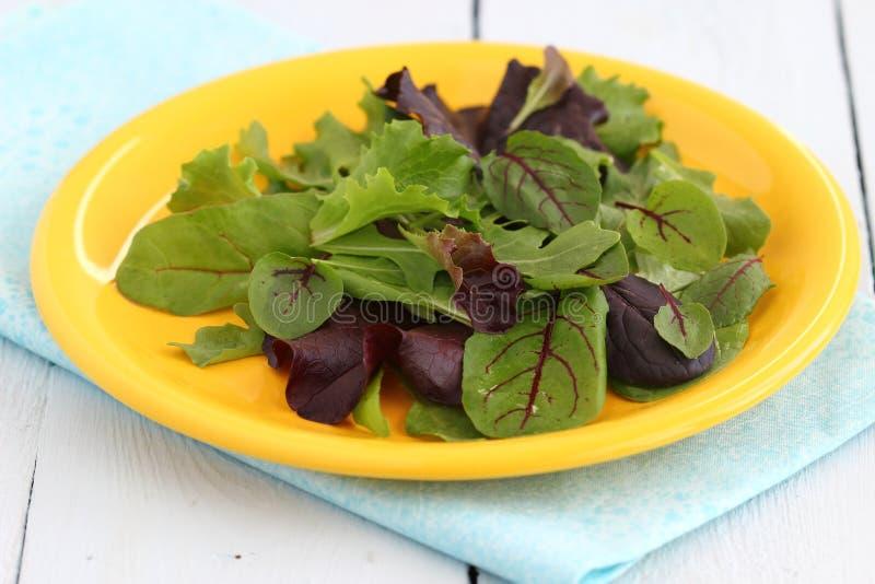 свежий зеленый смешанный салат стоковая фотография rf