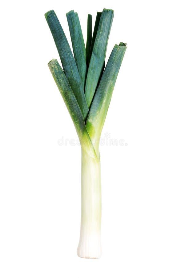 Свежий, зеленый лук-порей над белизной. стоковые фотографии rf