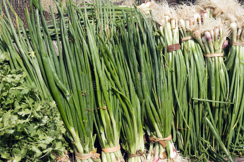 Свежий зеленый лук стоковые фотографии rf