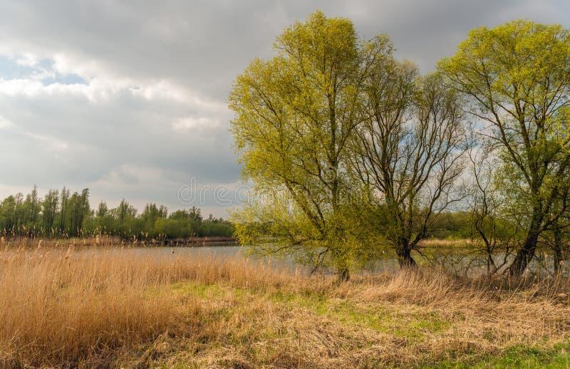 Свежий зеленый цвет выходит на высокие деревья на банке заводи стоковое изображение
