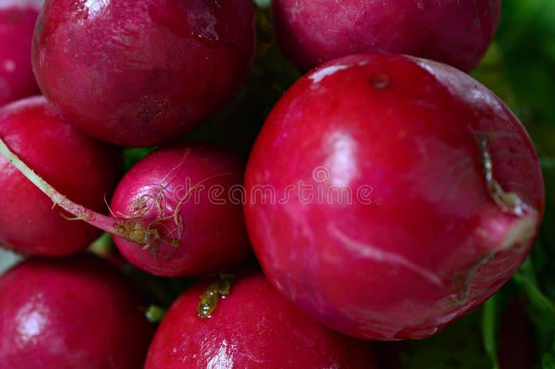 свежий и естественный взгляд макроса красных редисок стоковое фото rf