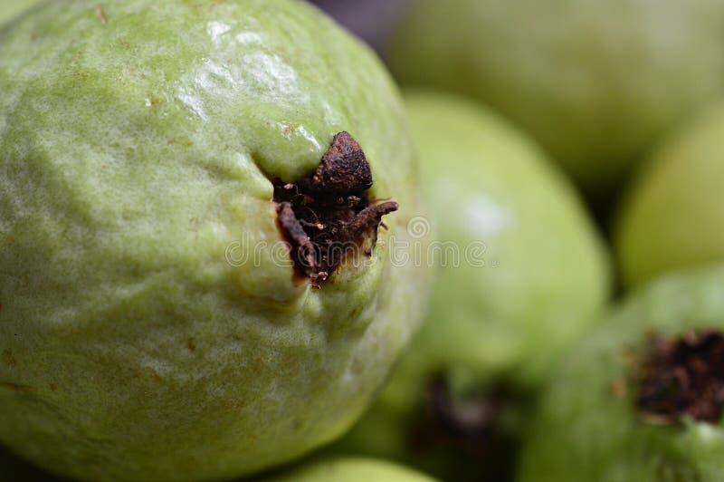 Свежий и естественный зеленый близкий взгляд guavas стоковые изображения rf
