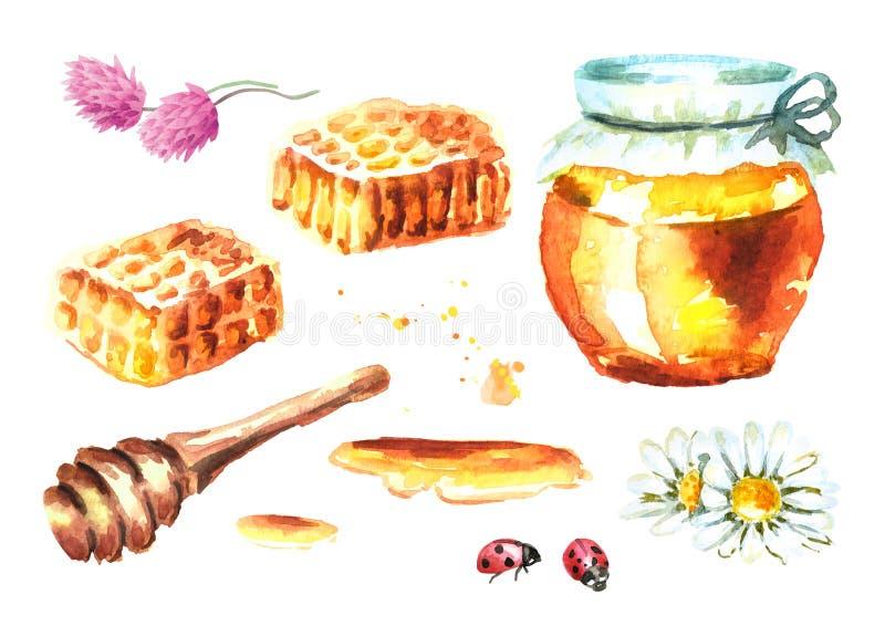 Свежий комплект элементов меда с сотами, ковшом меда, бутылкой, цветком, стоцветом, клевером и ladybug Illust акварели нарисованн иллюстрация вектора