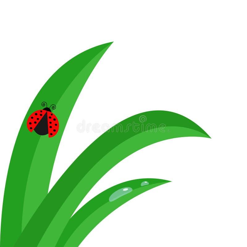 Свежий конец черенок зеленой травы вверх Комплект падения воды Комплект падения утра Насекомое ladybird Ladybug Милый характер мл иллюстрация штока