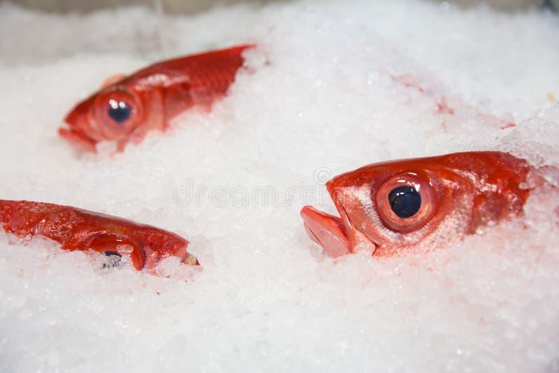Свежий красный люциан на льде стоковые фото
