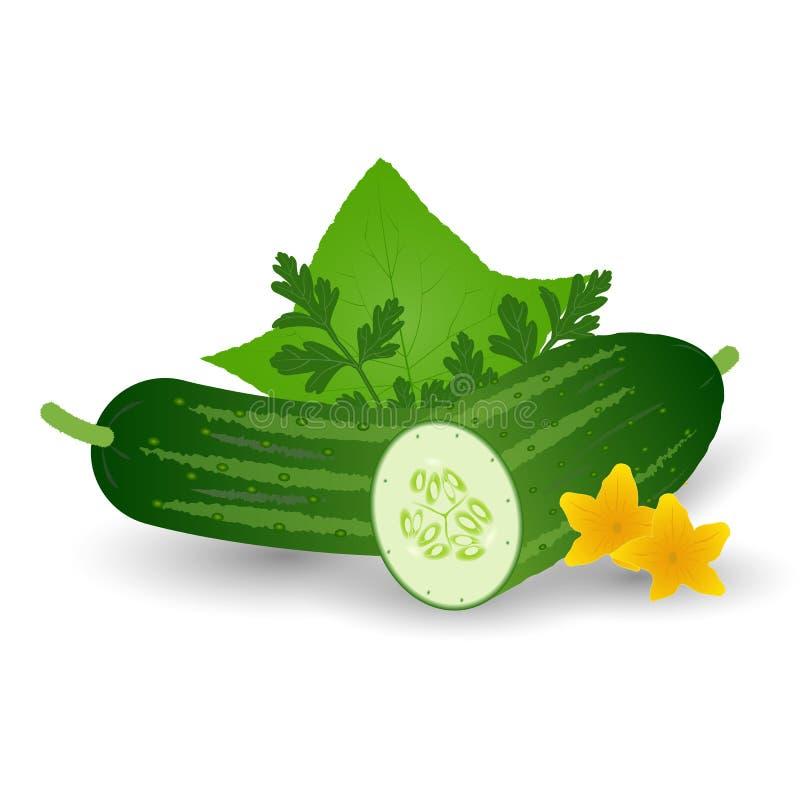 Свежий овощ огурца при листья, цветки и петрушка изолированные на белой предпосылке бесплатная иллюстрация