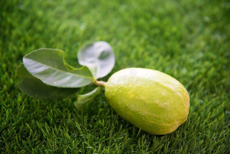Свежий органический лимон на лужайке стоковая фотография rf