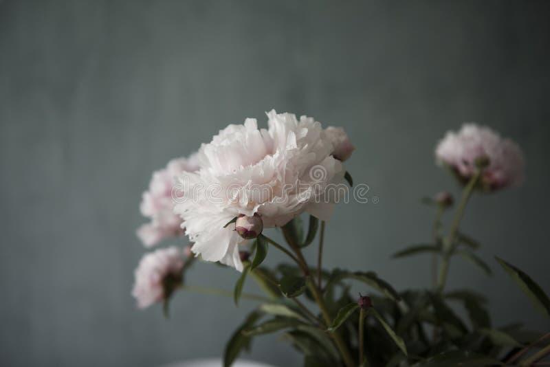 Свежий пук розовых цветков роз пионов стоковое изображение rf