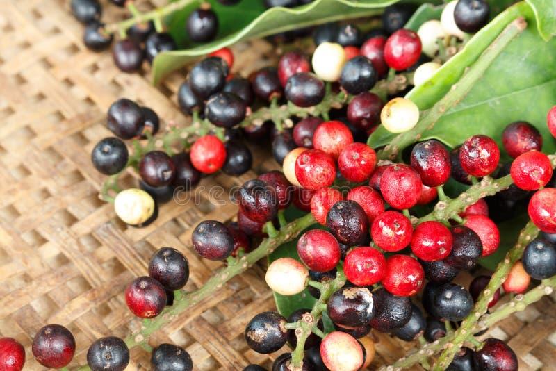 Свежий плодоовощ Таиланда местный, тайская голубика стоковое изображение rf