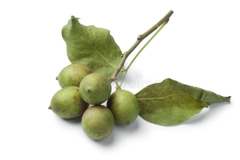 Свежий плодоовощ quenepa стоковые фотографии rf