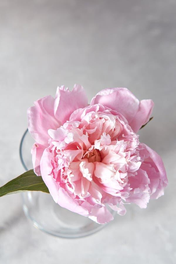 Свежий розовый пион цветка в стеклянной вазе на серой предпосылке stome Взгляд сверху стоковая фотография rf