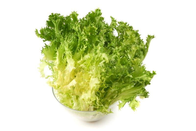 Свежий салат Romain Хрустящий эндивий конец-вверх, изолированный на белой предпосылке стоковая фотография rf