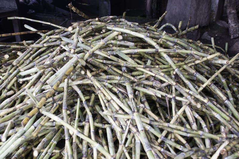 Свежий сахарный тростник стоковая фотография rf