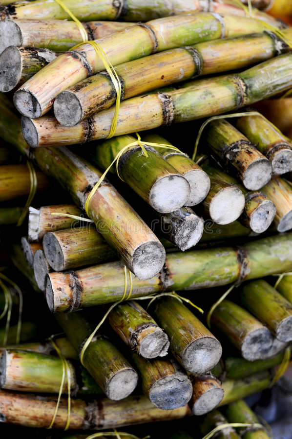 Свежий сахарный тростник стоковое изображение