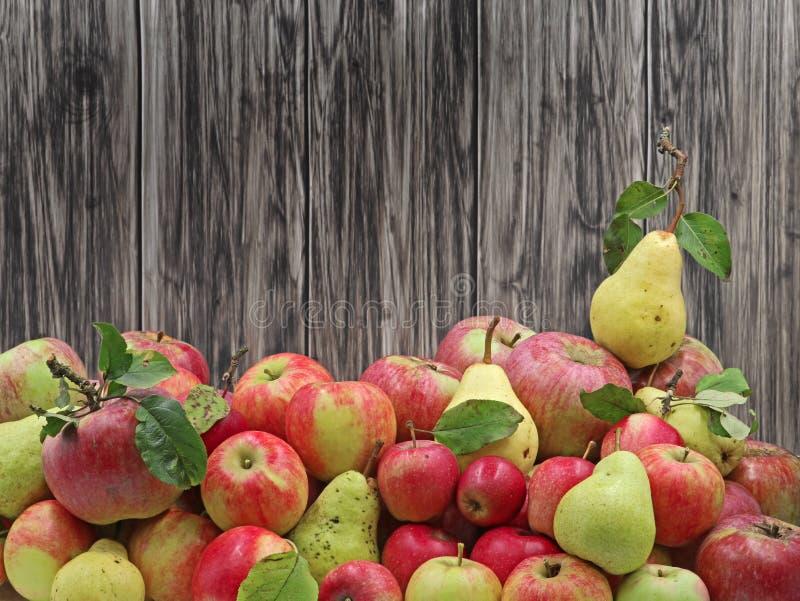 Свежий сбор зрелых яблок и груш на деревянной предпосылке стоковые изображения rf