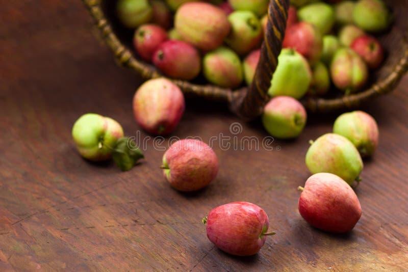 свежий сбор сладостных зрелых яблок сада стоковое изображение rf