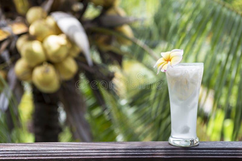 Свежий сок кокоса в стекле пива стоковые фото