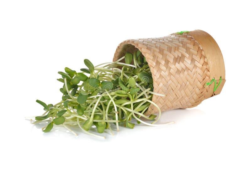 Свежий солнцецвет пускает ростии в бамбуковой корзине на белизне стоковые изображения