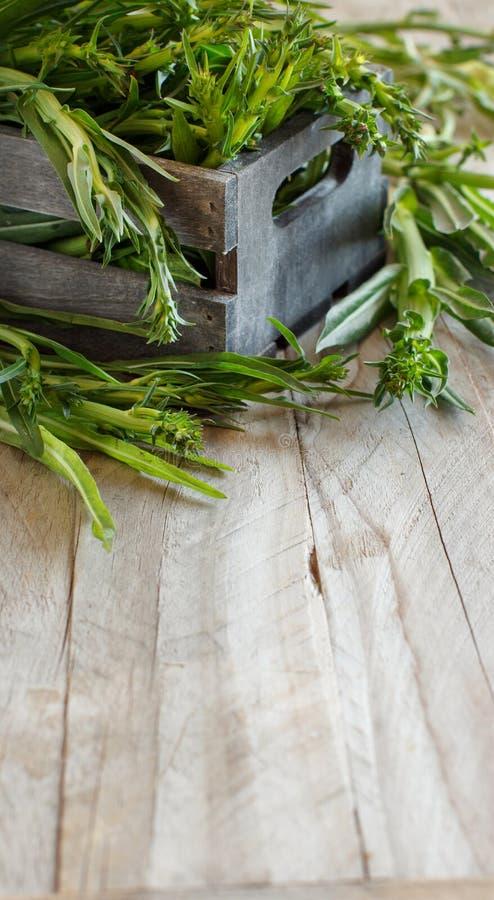 Свежий сырцовый итальянский цикорий, Puntarelle стоковое фото