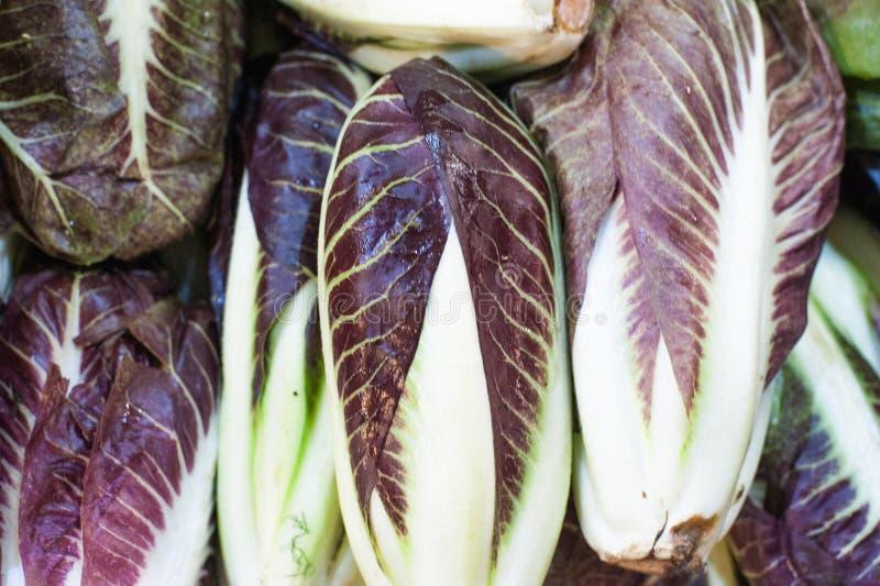 Свежий сырцовый фиолетовый radicchio итальянки цикория стоковые изображения rf
