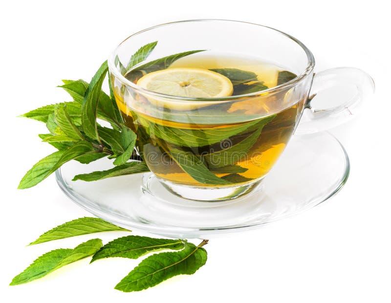 Свежий травяной чай мяты стоковое фото