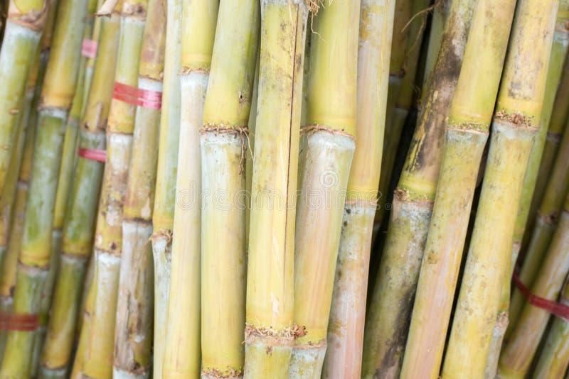 Свежий тростниковый сахар стоковые фотографии rf