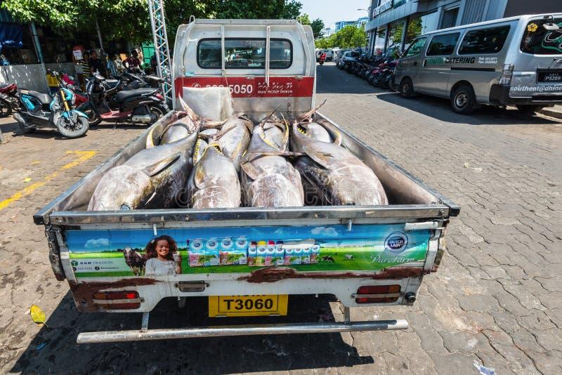 Свежий тунец в тележке стоковые изображения rf