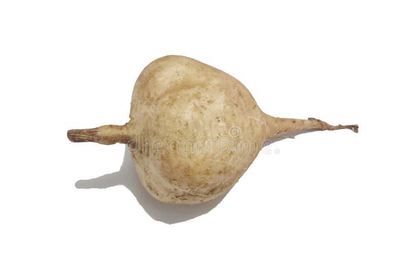 Свежий хомут изолированный на белой предпосылке Овощи для салата Здоровая, вегетарианская еда стоковые изображения
