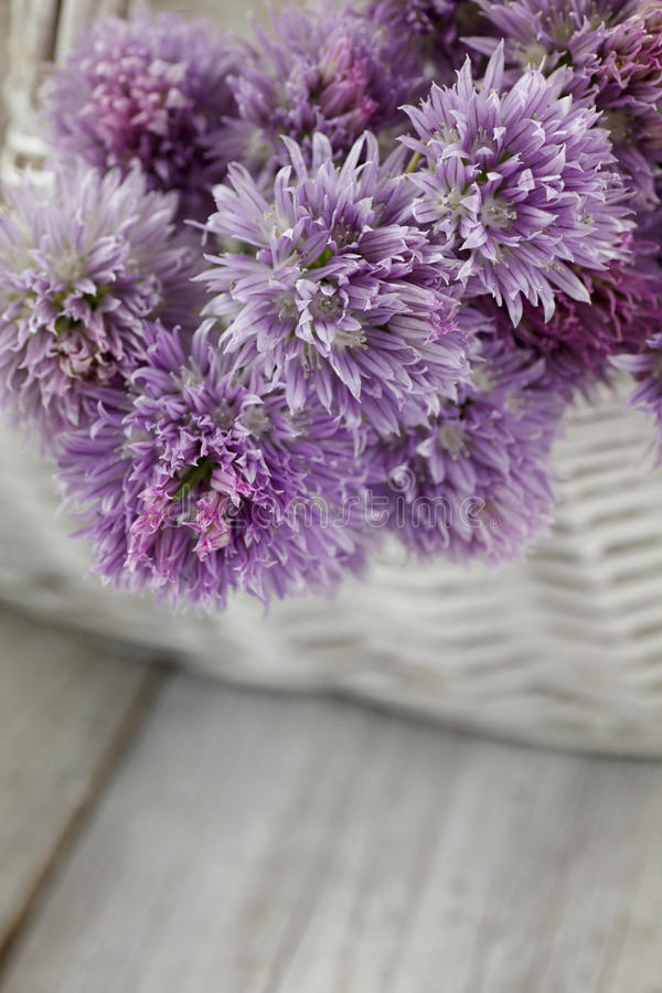 Download Свежий цветок chives стоковое фото. изображение насчитывающей environment - 40577220