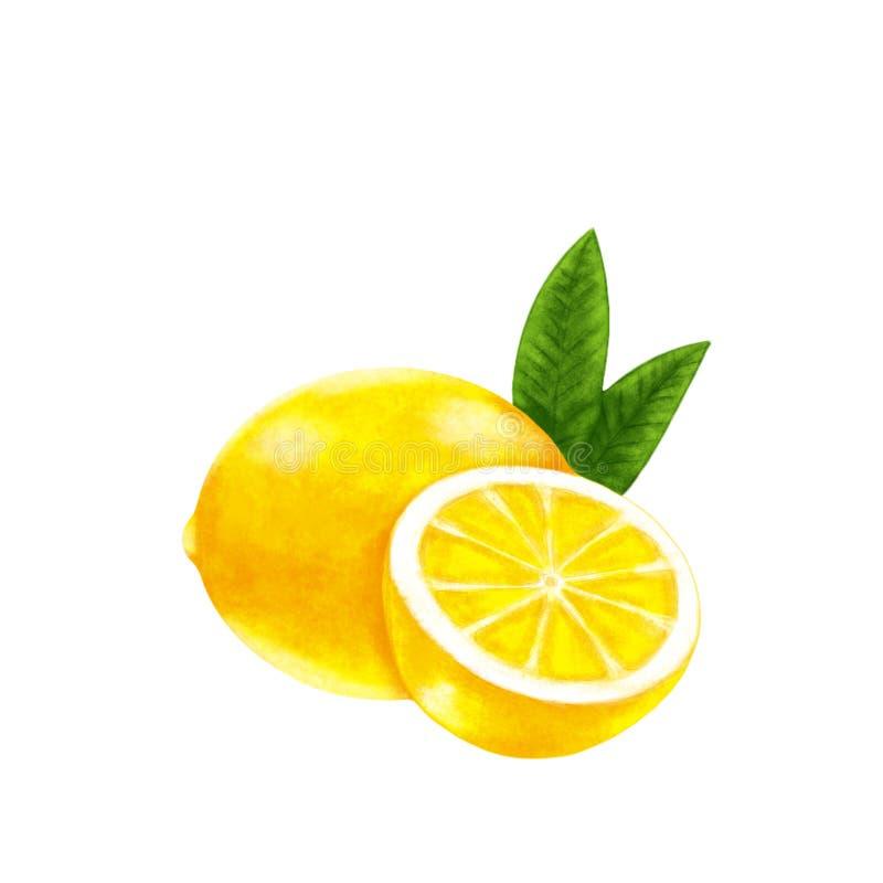 Свежий цитрус лимона с отрезком и зелеными листьями иллюстрация вектора